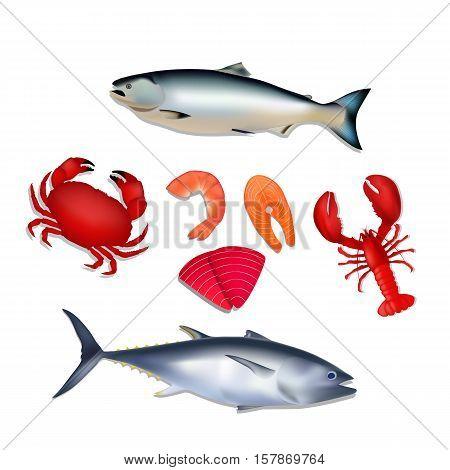 Isolated marine products. Fresh sea food isolated