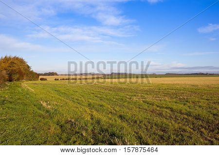Autumn Agricultural Land