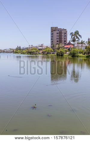 Turtles At Violao Lake In Torres