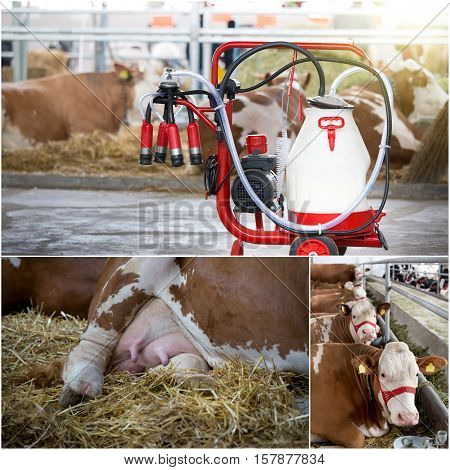 Dairy Industry Collage
