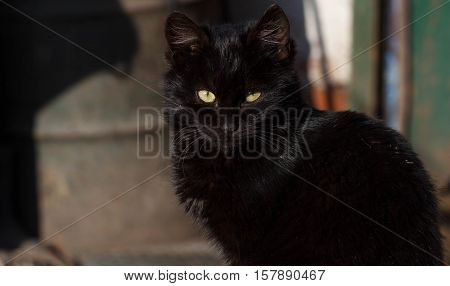 Beautiful black cat on the street. Clouse up