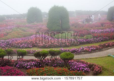 Impatiens flowerbeds  in a royal ornamental garden, Thailand