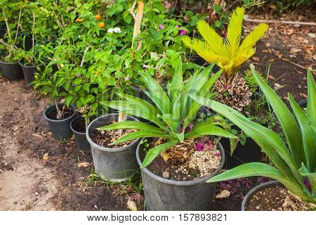 Green tropical flowers  growing in pots, arranged in a row