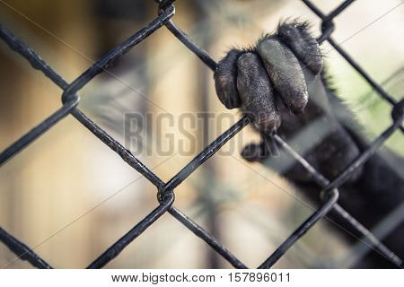 Exotic animals in captivity with monkey hand holding animal cage
