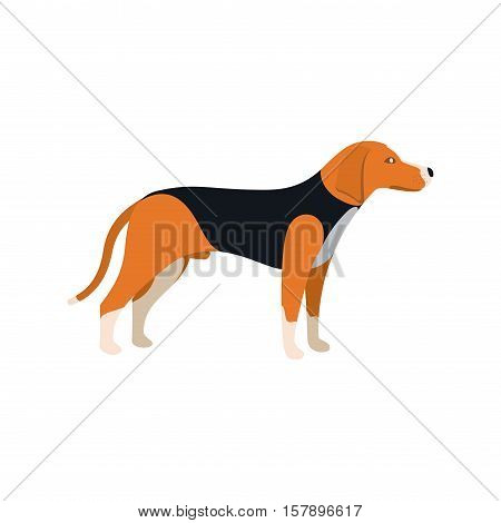 Beagle Dog - Vector color serious dog Beagle breed standing
