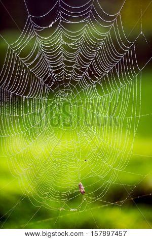 Spider web with nature backgorund transparent green