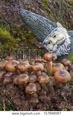Closeup of Gnome looking at a group of mushrooms emerging out of the ground with a few sparkles
