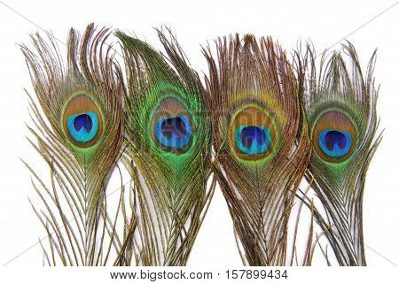 close up of the peacock feathers isolated on white