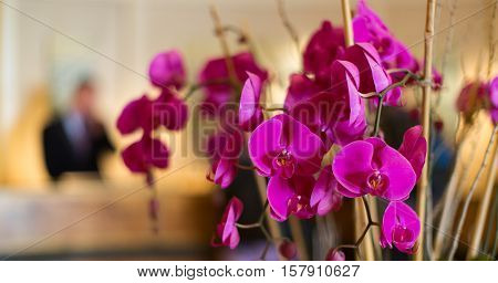hotel reception with flowers and receptionist in the background hospitality and travel concept