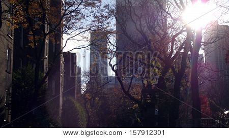 Sunlight Shining Through Trees in Autumn at Central Park
