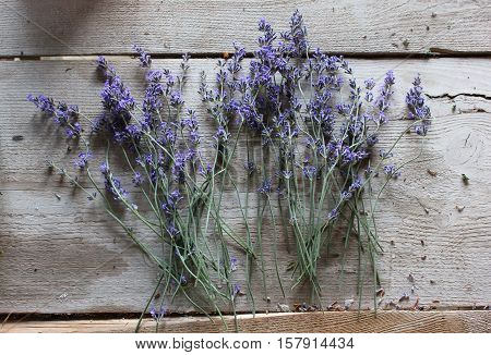 Lavender dry flowers on wooden surface. Lavender drying on the table. Tiny lavender flowers from garden.