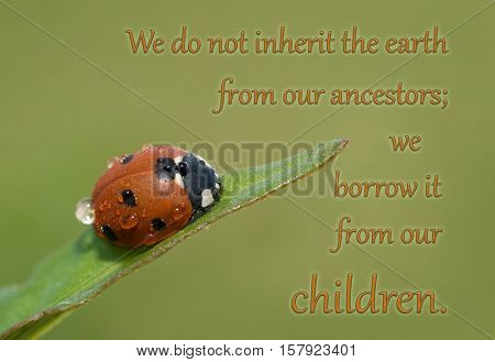 We do not inherit the earth from our ancestors; we borrow it from our children - quote with a Ladybug on a grass leaf