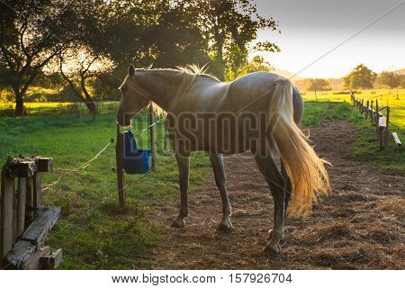 View of horses in the farm animals
