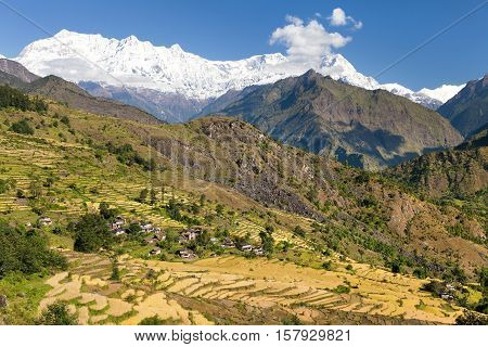 Rice field under Dhaulagiri Himal and snowy Himalayas mountain in Nepal