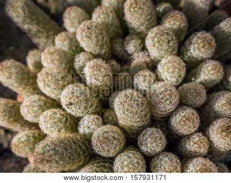 Closeup shot of cactus plant