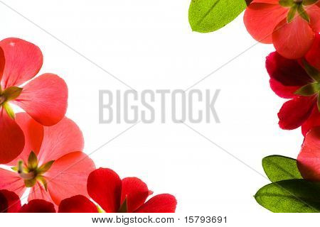 Floral Border Over White Background