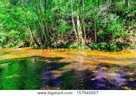 beautiful tropical rainforest and stream in deep forest, Phu Kradueng National Park, Thailand