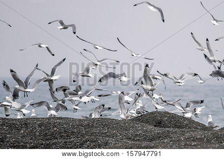 rookery is on a black beach near the sea