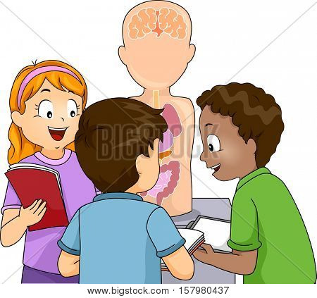 Illustration of a Group of Preschool Kids Studying an Anatomical Model