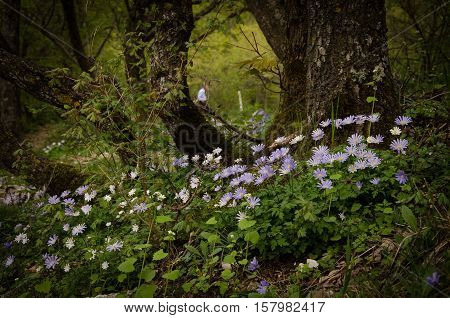 Photo of Enchanted forest with violet wild flowers
