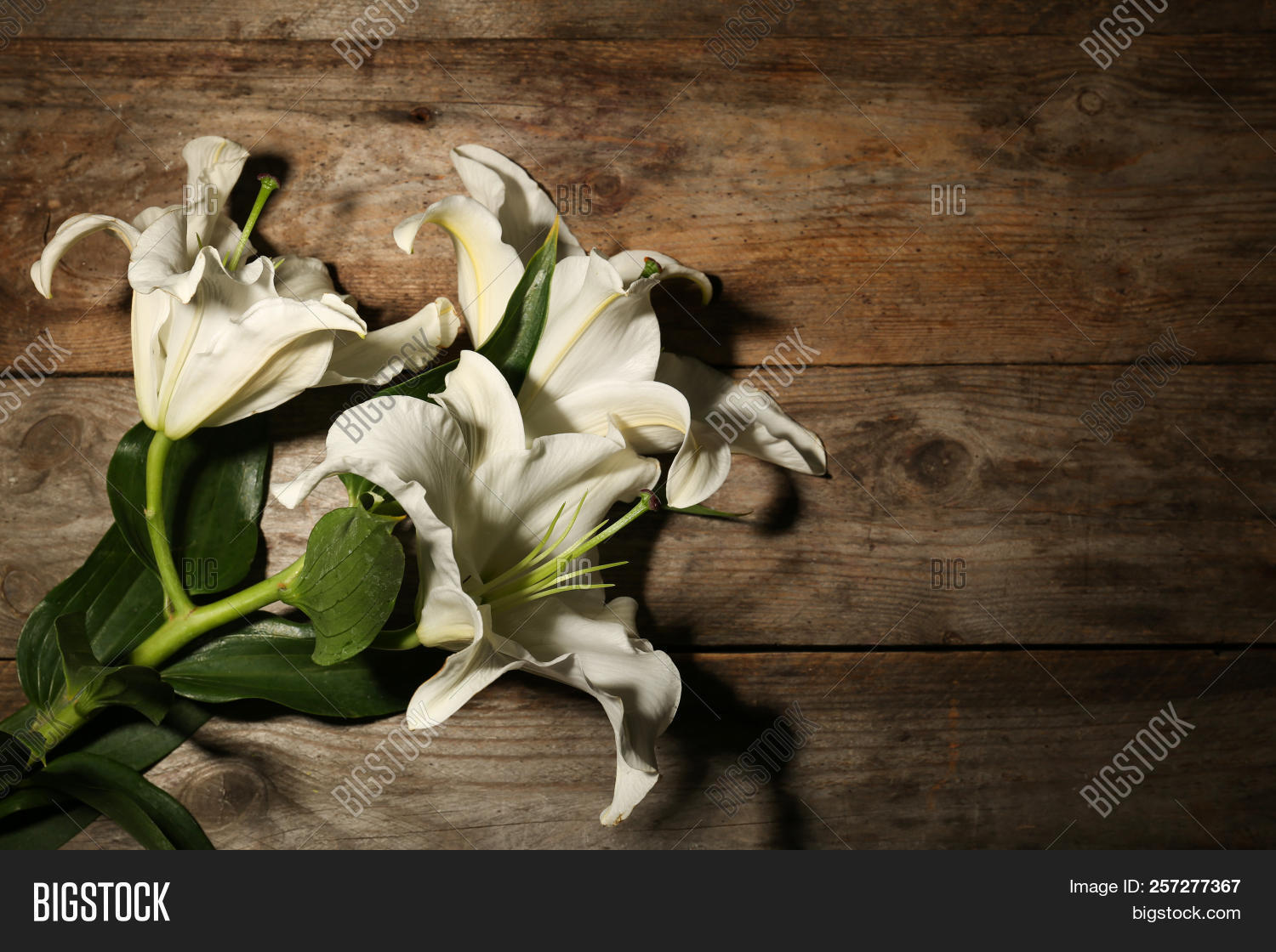 Beautiful Lilies Space Image Photo Free Trial Bigstock