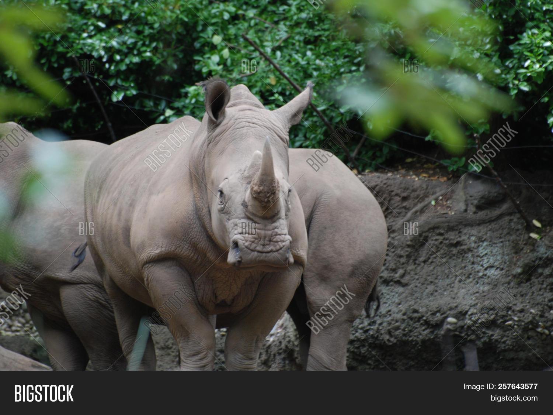 Rhino Trial