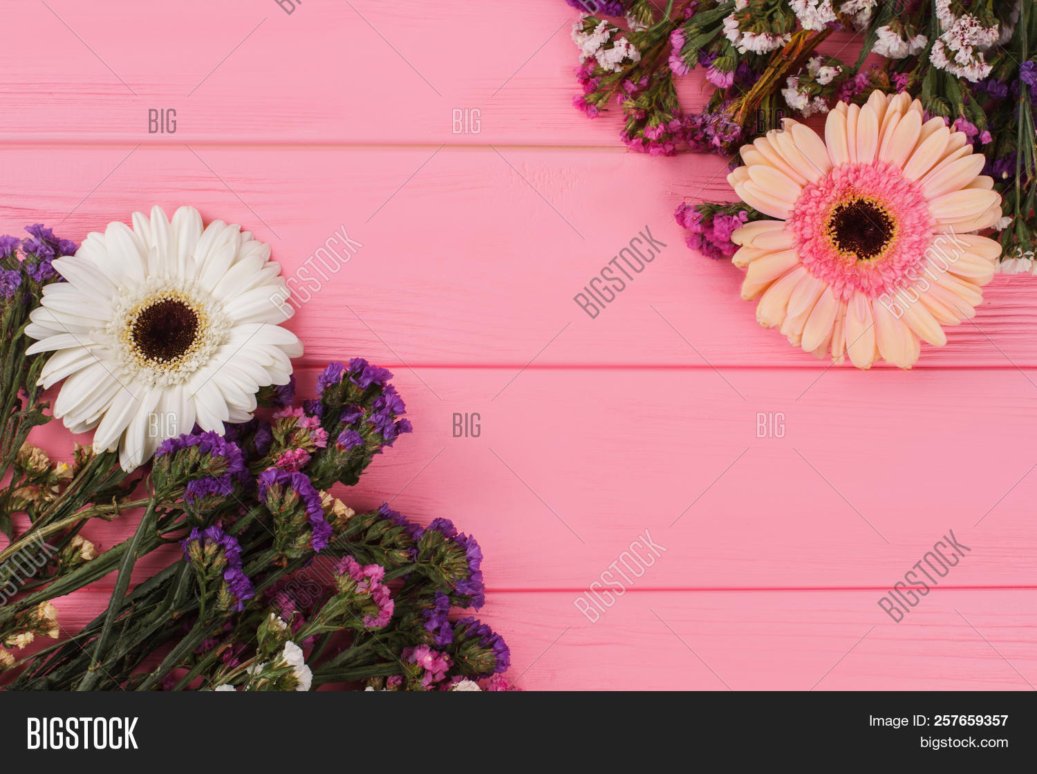 Statice Daisy Flowers Image Photo Free Trial Bigstock