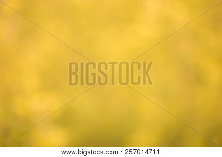 Natural Golden Bokeh Background