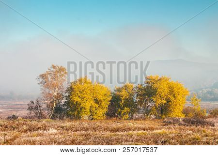 Beautiful Autumn Landscape In The Valley. Fog Above The Meadow And Yellow Trees In Sunlight. Mountai