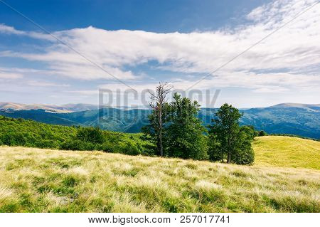 Beech Trees On The Edge Of A Grassy Hill. Gorgeous Cloudscape Above Grassy Meadow. Mountain Ridge Wi