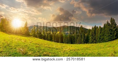 Panorama Of Alpine Forest Glade At Sunset. Beautiful Early Autumn Landscape In Carpathian Mountains.