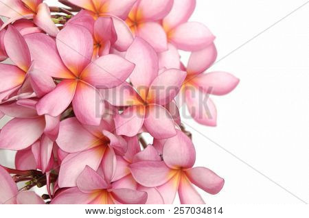 Bouquet of pink hydrangea