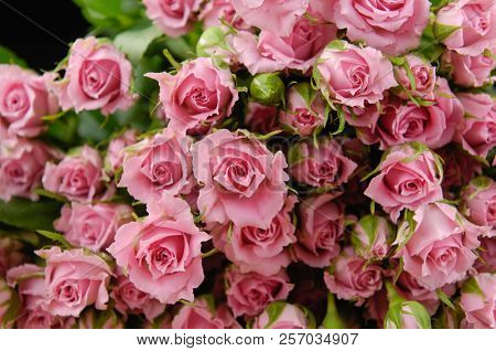 Close up Bouquet of fresh pink rose bright background,