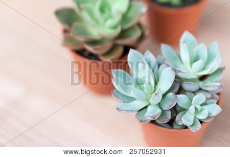 Closeup Green Succulent In Pot On Wood Table Background, Decoration Plant Concept, Selective Focus
