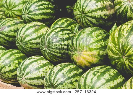 Many Big Sweet Green Watermelons. Green Background