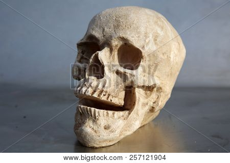 Plastic Resin Human Skull. Halloween Human Skull. Evil Skeleton. Cheap Human Skull for Photo Booth Props.