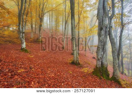 Forest Trail In The Mountains On A Misty Autumn Day.