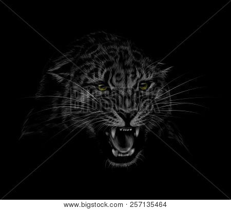 Portrait Of A Leopard Head On A Black Background. Grinning Of A Leopard