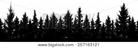 Seamless Pattern. Forest Of Christmas Fir Trees Silhouette. Coniferous Spruce.