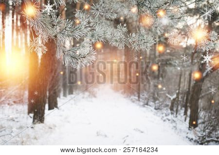 Christmas Background. Winter Forest With Glowing Snowflakes. Christmas Forest With Snowy Road. Pine
