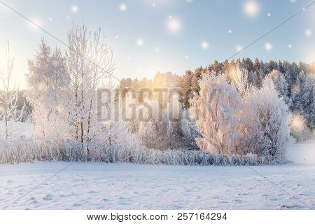 Christmas Background. Winter Morning. Nature Winter Landscape With Shining Color Snowflakes On Sun.