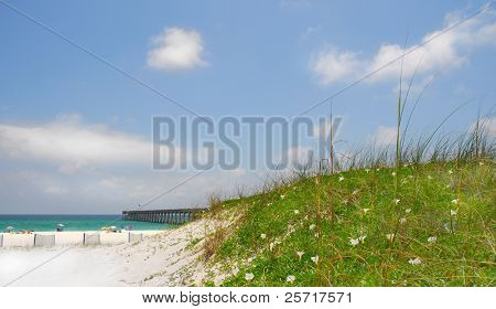 Flower covered sand dune by fishing pier with beachgoers in distance