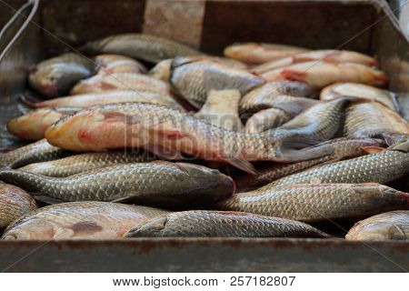 Natural Texture Of A Heap Of Fresh Fish In An Iron Box