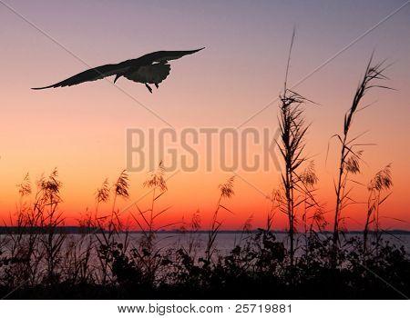 Seagull flying at seashore at sunset