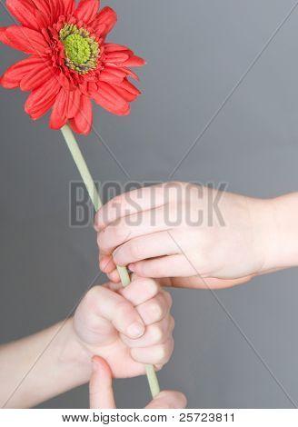 Smaller child giving bigger child a flower