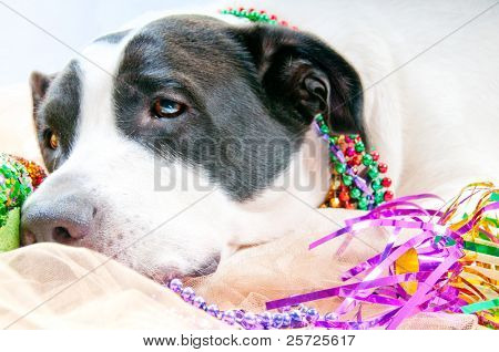 Dog Sick after too much partying