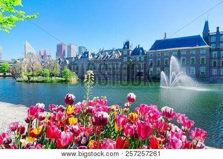 Binnenhof - Dutch Parliament With Growing Tulips, The Hague, Holland