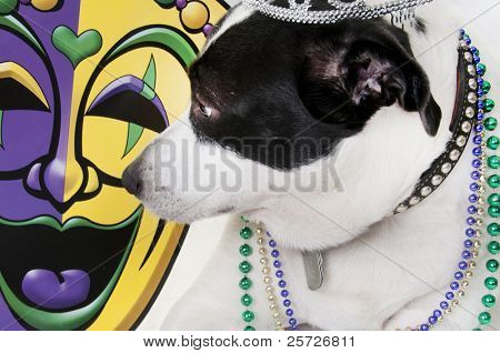 dog in beads ready for party