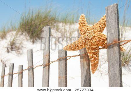 starfish drying on beach fence