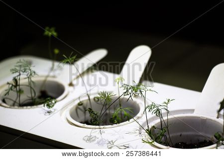 Device For Energy Production By Means Of Plant Growth. Small Plants Grow In The Ground.